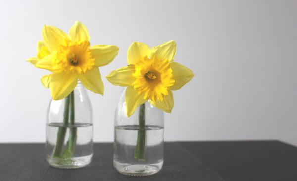 Daffodils in a glass bottle vase