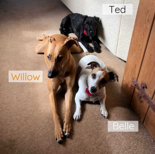 Willow Ted Belle